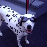 Chelsea wearing her Doggles