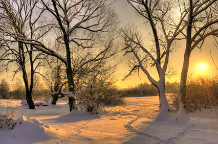 Beautiful winter sunset with snow and trees