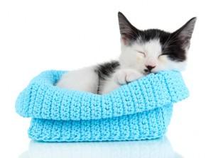 kitten in yarn