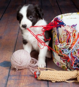 Dog with yarn