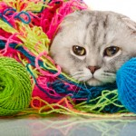 Scratching Your Head Over Which Yarn to Use?