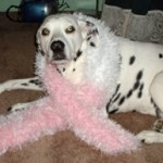 My dog Chelsea with pink scarf
