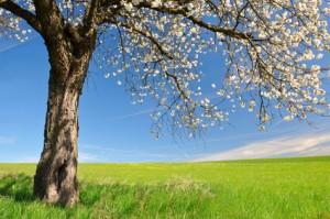 Dowood tree